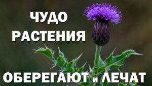 Эзотерика растений Чудо растения