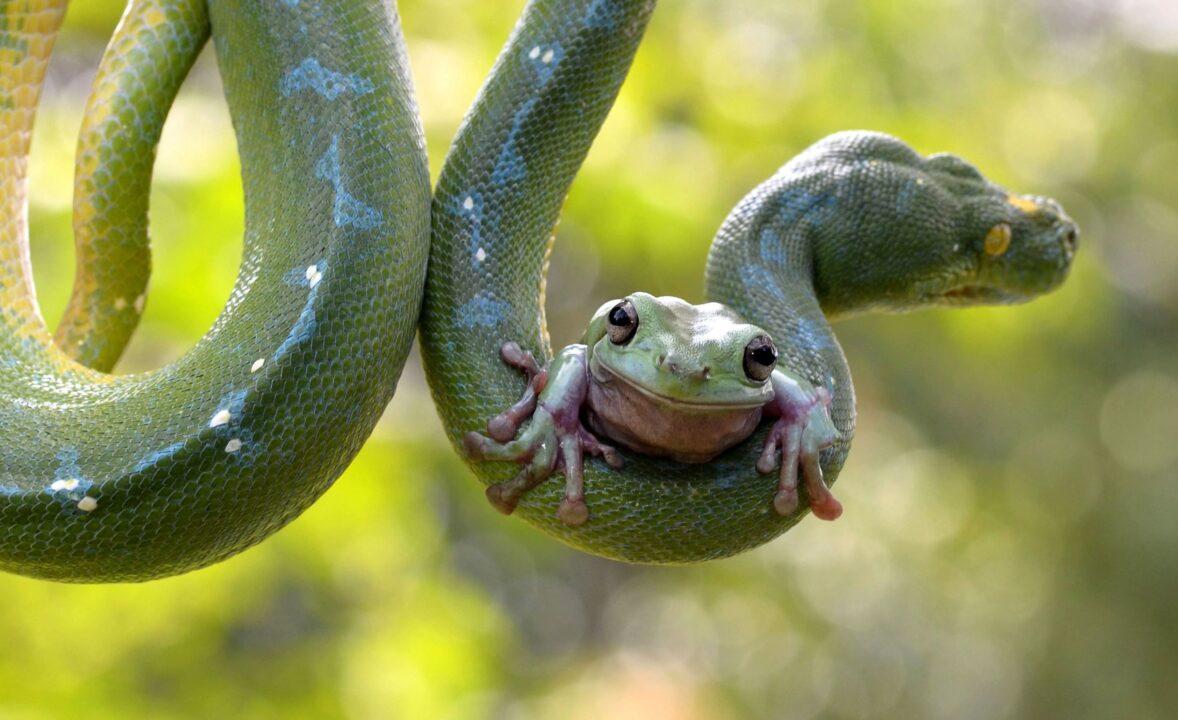 Про животных жаба и змея